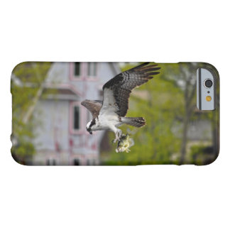 Vuelo Osprey que caza y que lleva pescados cogidos Funda Para iPhone 6 Barely There