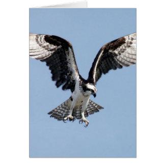 Vuelo Osprey Tarjeta De Felicitación