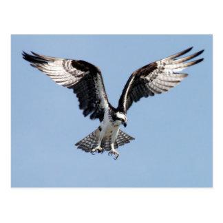 Vuelo Osprey Postal