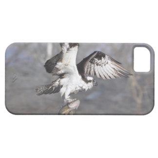 Vuelo Osprey y escena de la foto de la fauna de lo iPhone 5 Case-Mate Cobertura