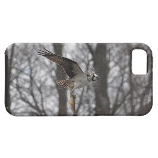 Vuelo Osprey y escena de la foto de la fauna de lo iPhone 5 Fundas