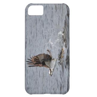 Vuelo Osprey y escena de la foto de la fauna de lo