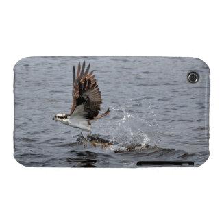 Vuelo Osprey y escena de la foto de la fauna de lo iPhone 3 Protectores
