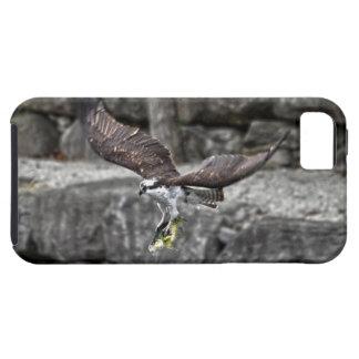 Vuelo Osprey y escena de la foto de la fauna de lo iPhone 5 Protectores