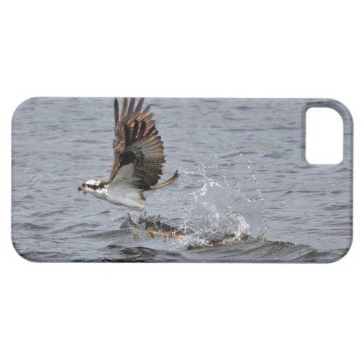 Vuelo Osprey y escena de la foto de la fauna de lo iPhone 5 Coberturas