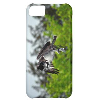Vuelo Osprey y escena de la foto de la fauna del b