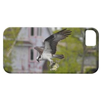 Vuelo Osprey y escena suburbana de la foto de la f iPhone 5 Protector