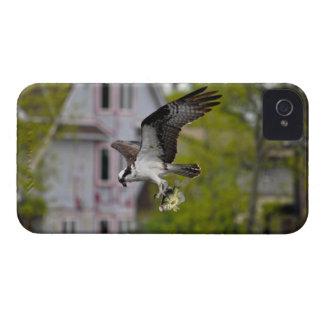 Vuelo Osprey y escena suburbana de la foto de la f iPhone 4 Case-Mate Carcasas