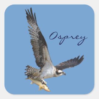 Vuelo Osprey y fotografía de la fauna de los Pegatina Cuadrada