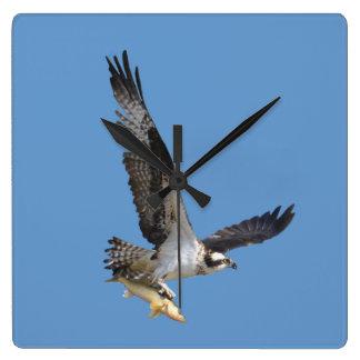 Vuelo Osprey y fotografía de la fauna de los Reloj Cuadrado