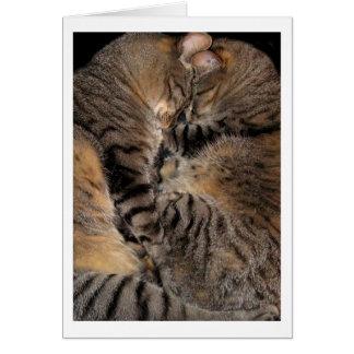 Vulcan Kitten Mind-Meld Card