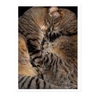 Vulcan Kitten Mind-Meld Postcard