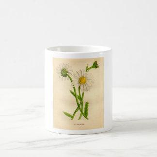 Vulgare botánico del Leucanthemum de la margarita Taza Básica Blanca