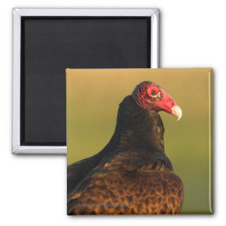 Vulture 2 Inch Square Magnet