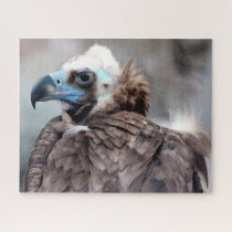 Vulture  Bird of Prey. Jigsaw Puzzle