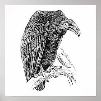 Vulture Bird Realistic Sketch Poster