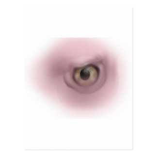 Vulture Eye Postcard