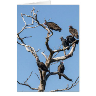 Vulture Family Tree Greeting Card