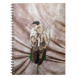 Vulture Notebook