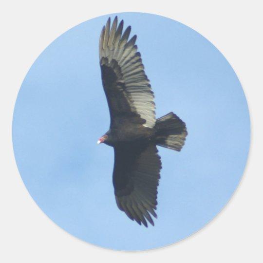 Vulture Ornithology Classic Round Sticker