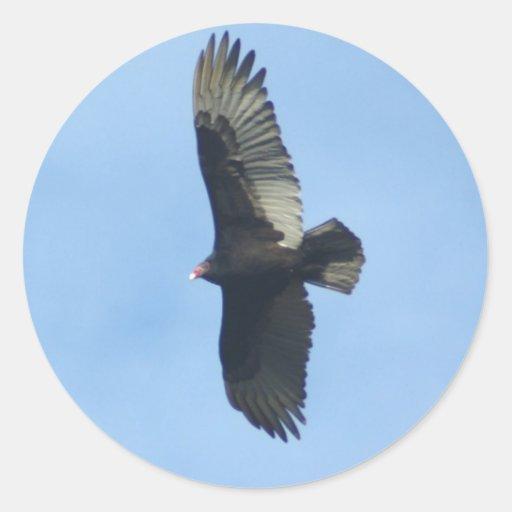 Vulture Ornithology Round Stickers