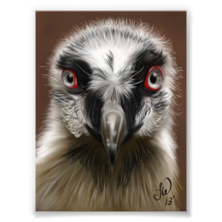 Vulture Photo Print
