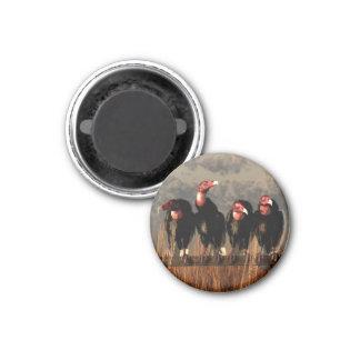 Vulture Quartet Fridge Magnet