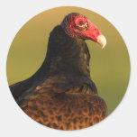 vulture round stickers
