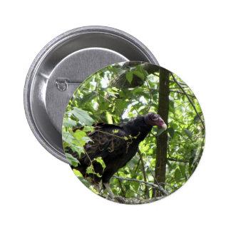 Vulture Turkey Vulture Cathartes aura Pinback Button