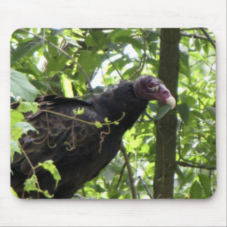 Vulture Turkey Vulture Cathartes aura Mouse Pad