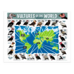 Vultures of the World Map Post Card