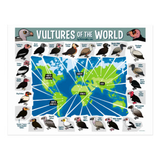 Vultures of the World Map Postcard