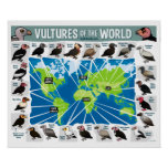 Vultures of the World Poster