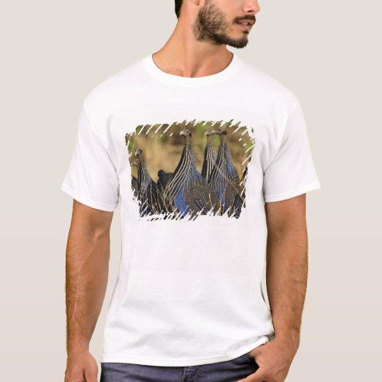 Vulturine Guinea fowl, Acryllium vulturinum, T-Shirt