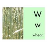 W está para el trigo tarjetas postales
