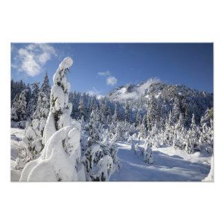 WA, Alpine Lakes Wilderness, Snow Lake basin Art Photo