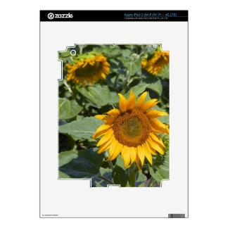 WA, el condado de Kittitas, campo 2 del girasol iPad 3 Skin