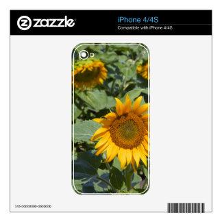 WA, Kittitas County, Sunflower Field 2 iPhone 4S Decals