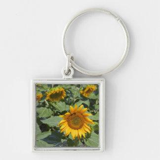 WA, Kittitas County, Sunflower Field 2 Keychain