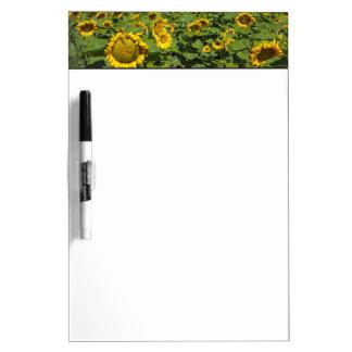 WA, Kittitas County, Sunflower Field Dry-Erase Whiteboards