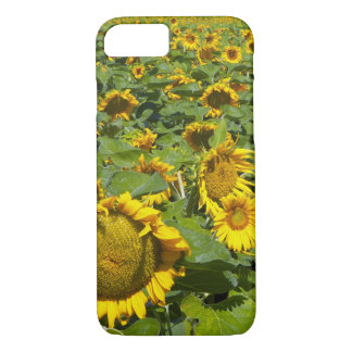 WA, Kittitas County, Sunflower Field iPhone 8/7 Case