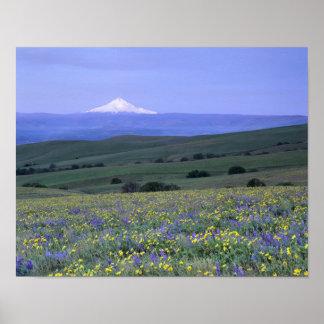 WA, Klickitat County, Dalles Mountain Ranch, Poster