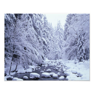 WA, Mount Baker-Snoqualmie National Forest, Photo Print