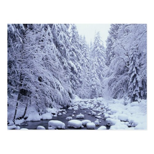 WA Mount Baker_Snoqualmie National Forest Postcard