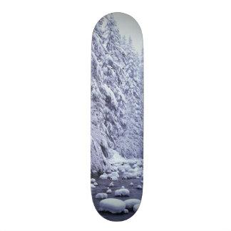 WA, Mount Baker-Snoqualmie National Forest, Skateboard