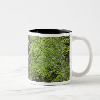 WA, Mount Rainier National Park, Christine Falls Two-Tone Coffee Mug