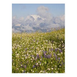 WA, Mt. Baker Wilderness, Mt. Shuksan and Postcard
