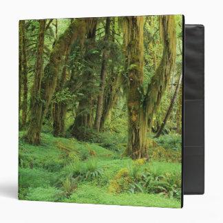 WA, NP olímpico, selva tropical de Quinault, musgo