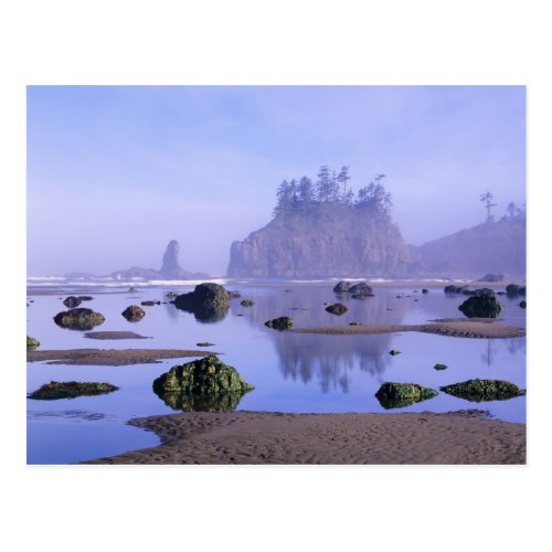 WA Olympic National Park Second Beach Postcard