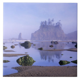 WA, Olympic National Park, Second Beach, Tile
